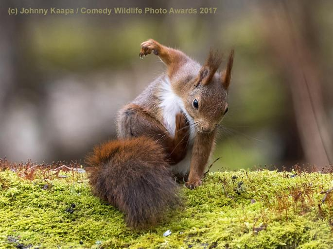 comedy-wildlife-2017-finalists-21