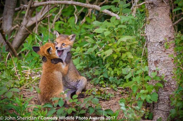 comedy-wildlife-2017-finalists-29