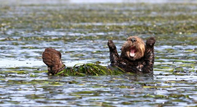comedy-wildlife-photography-awards-winners-2017-11-5a33d74043afd__880