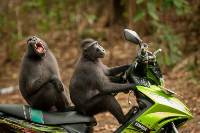 comedy-wildlife-photography-awards-winners-2017-12-5a33d7424c88d__880