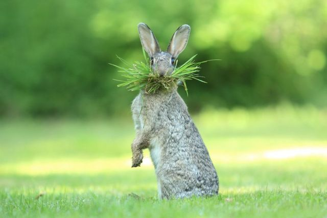 comedy-wildlife-photography-awards-winners-2017-13-5a33d7446af6c__880