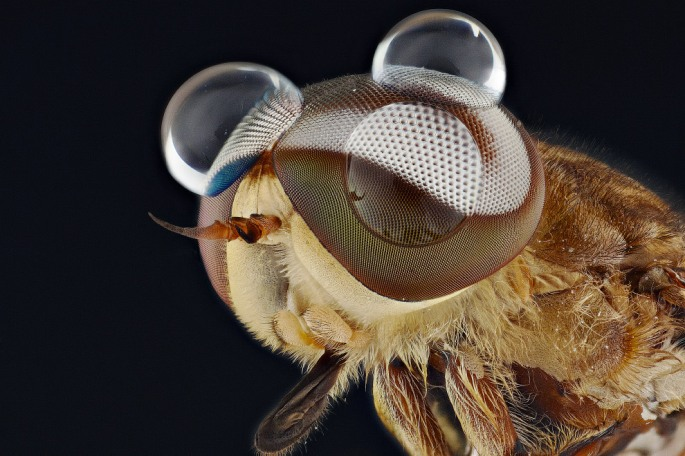 bug02s