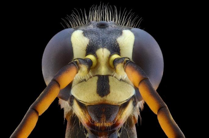 bug08s
