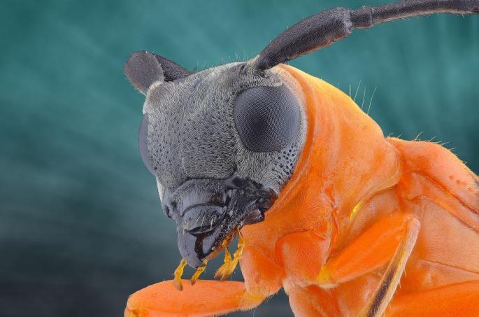 bug18s