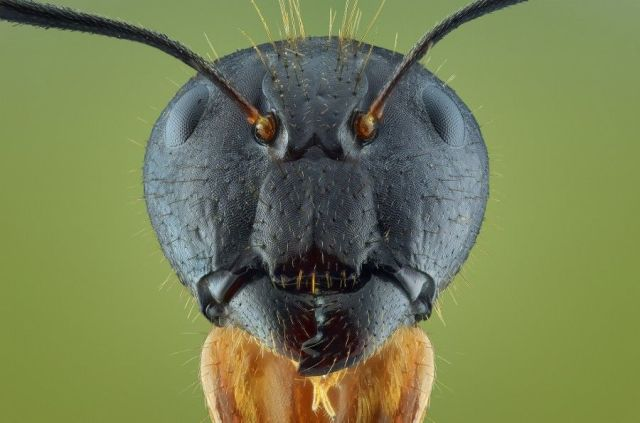 macro-bug-photography-5