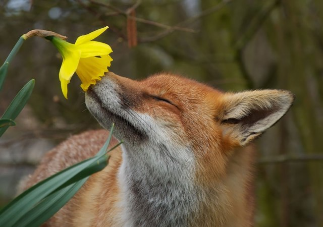 animals-smelling-flowers-110