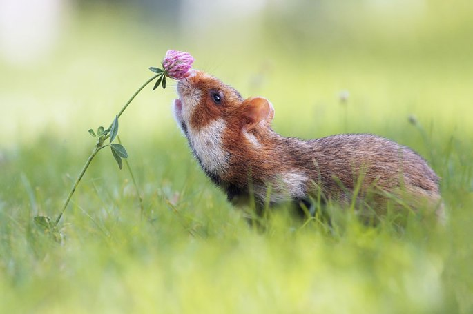 animals-smelling-flowers-191__880