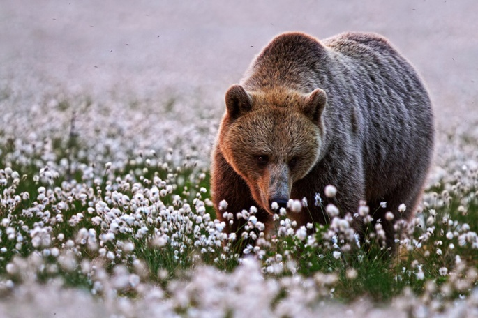animals-smelling-flowers-241__880
