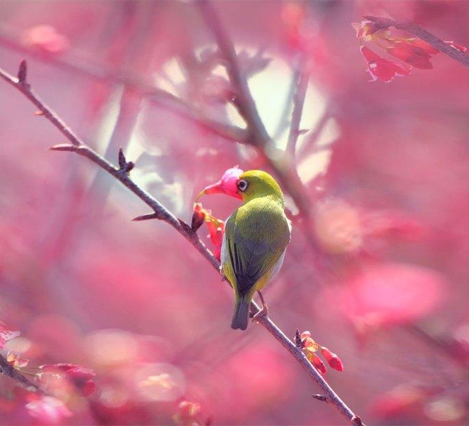 animals-smelling-flowers-262__880.jpg