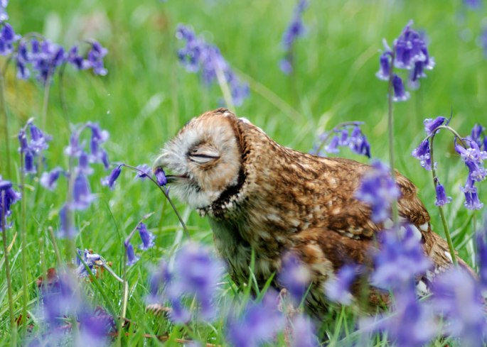 animals-smelling-flowers-26__880