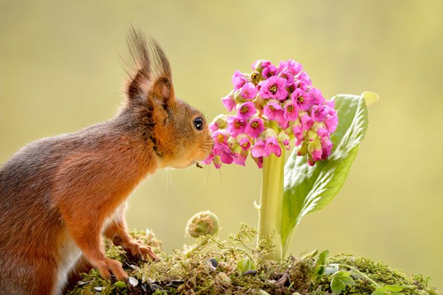 animals-smelling-flowers-281__880