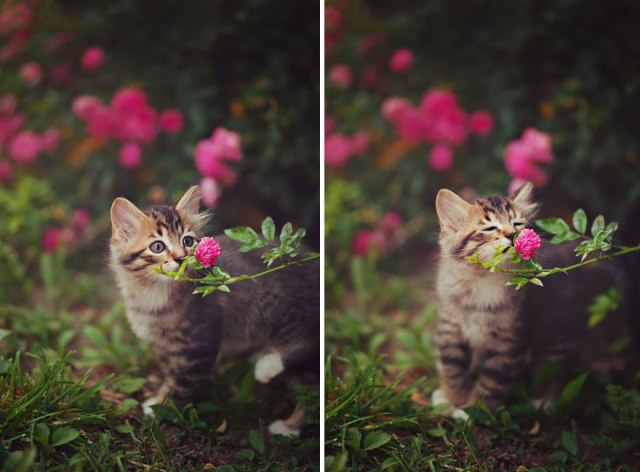 animals-smelling-flowers-28__880