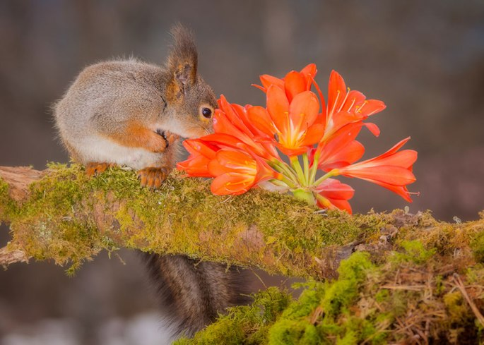 animals-smelling-flowers-291__880.jpg