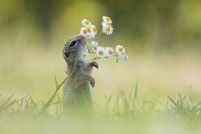 animals-smelling-flowers-34__880.jpg