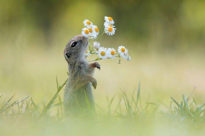 animals-smelling-flowers-34__880.jpg