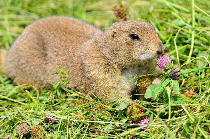 animals-smelling-flowers-391__880.jpg