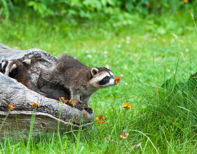 animals-smelling-flowers-401__880