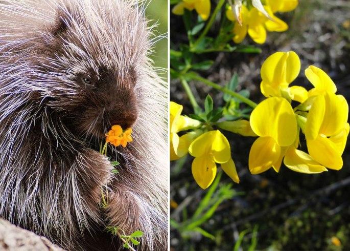 animals-smelling-flowers-40__880.jpg