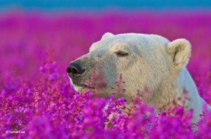 animals-smelling-flowers-421__880.jpg