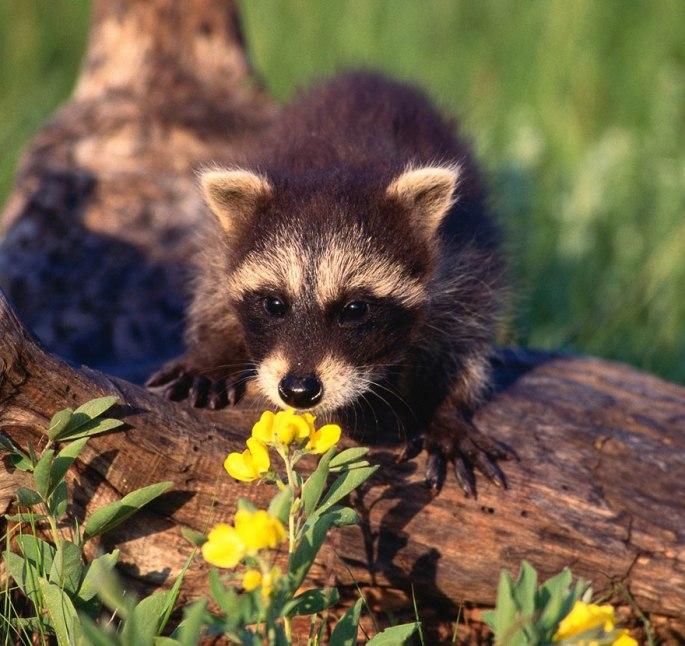 animals-smelling-flowers-441__880.jpg