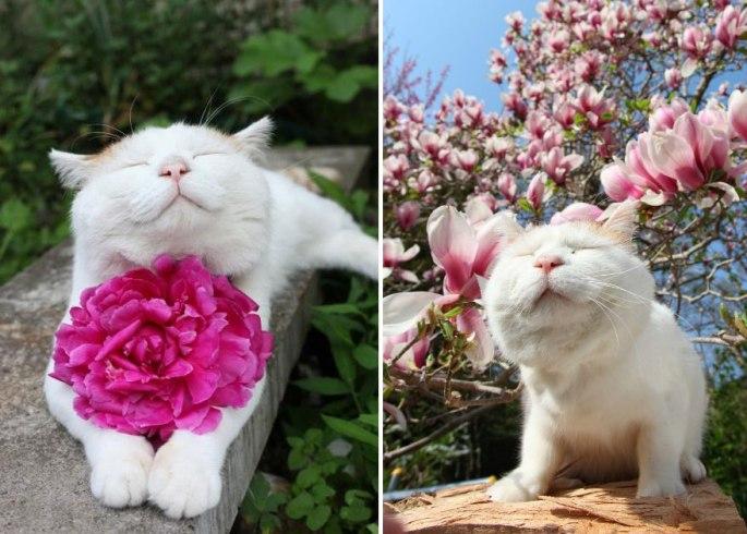 animals-smelling-flowers-46__880.jpg
