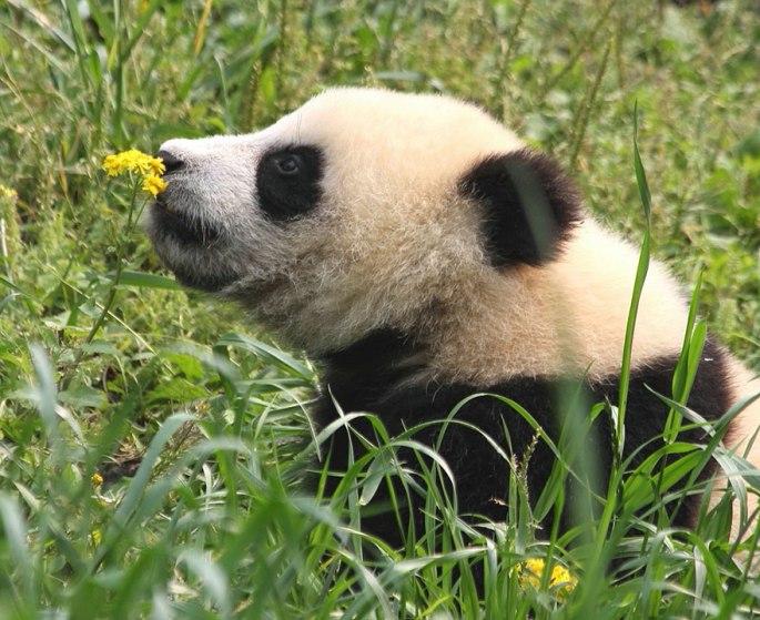 animals-smelling-flowers-471__880.jpg