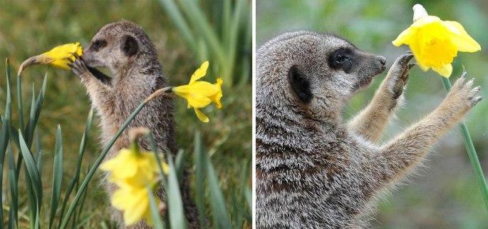 animals-smelling-flowers-47__880.jpg