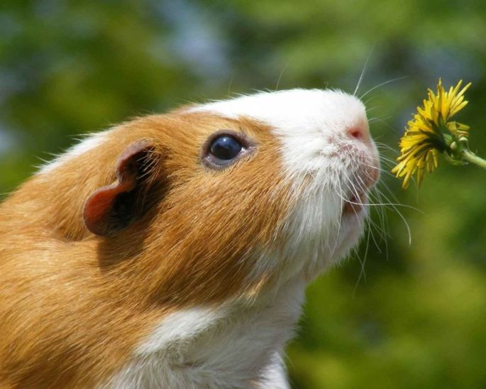 cat-smelling-flowers-9__880