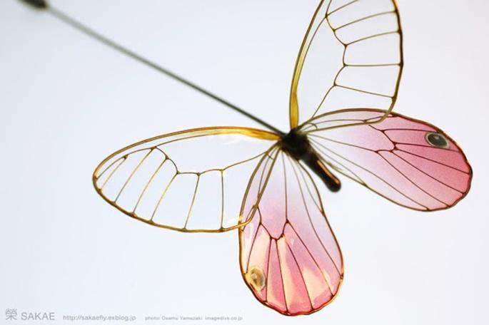 бабочка 06