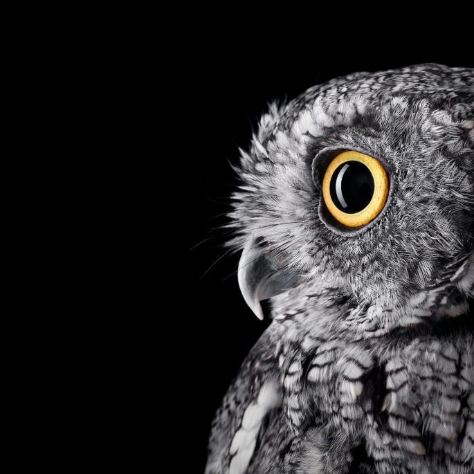 owl-portraits-1