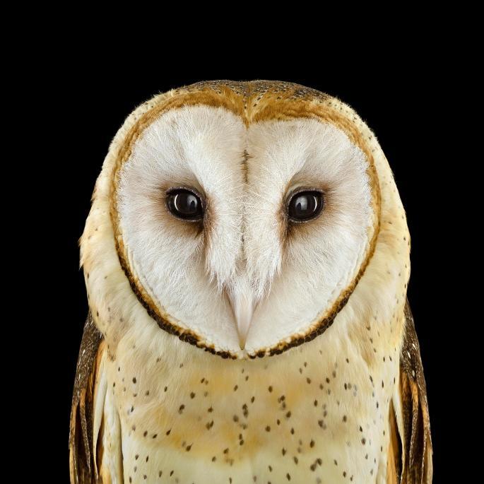 owl-portraits-2