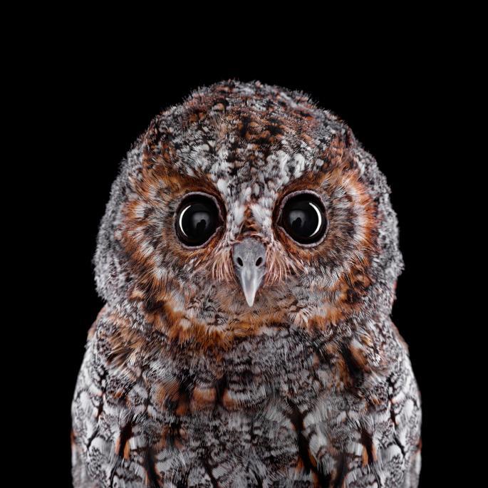 owl-portraits-5
