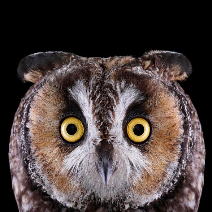 owl-portraits-7