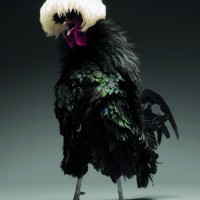 """The sexiest and Most Beautiful Chickens On The Planet"" by Moreno Monti and Matteo Tranchellini"