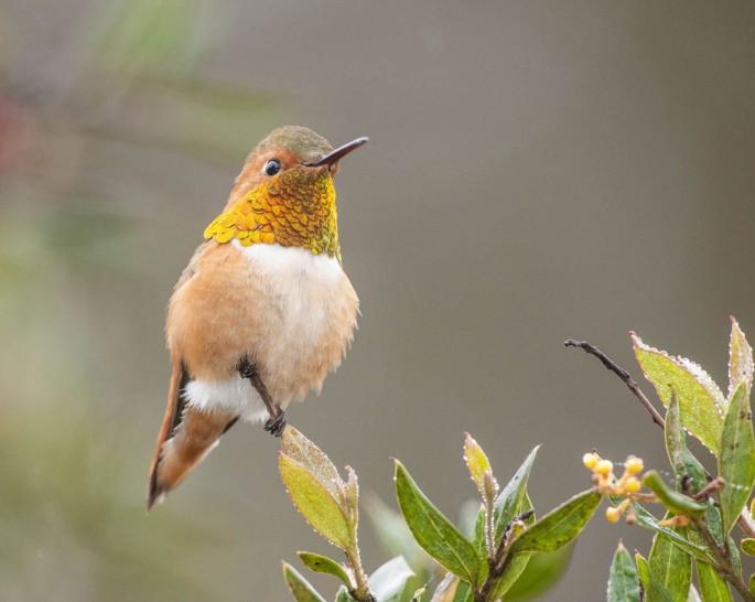 11-humming-bird-photography-by-allen-david-leninson