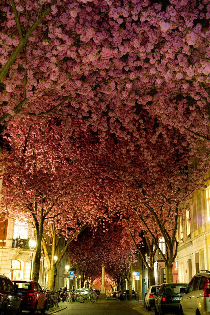19-of-the-most-beautiful-trees-in-the-world-1.jpg