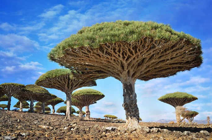 19-of-the-most-beautiful-trees-in-the-world-10
