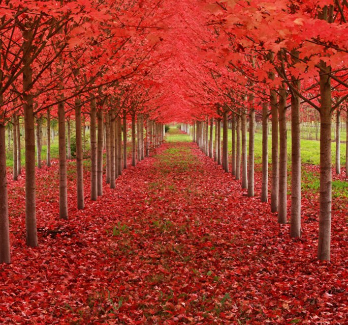 19-of-the-most-beautiful-trees-in-the-world-12