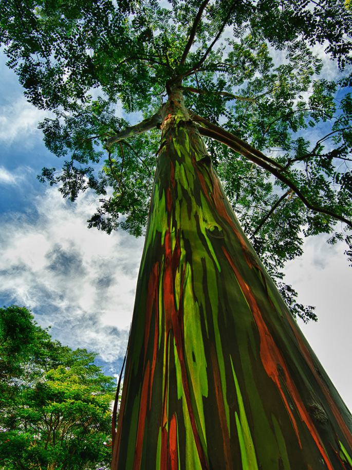 19-of-the-most-beautiful-trees-in-the-world-14.jpg