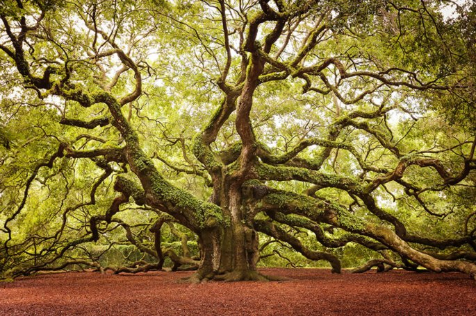 19-of-the-most-beautiful-trees-in-the-world-2