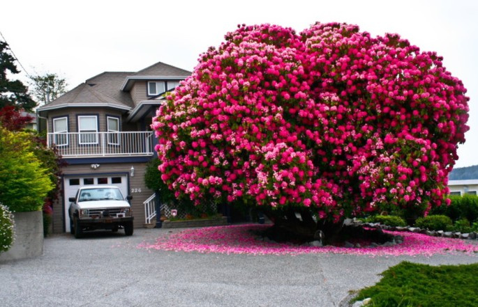 19-of-the-most-beautiful-trees-in-the-world-3