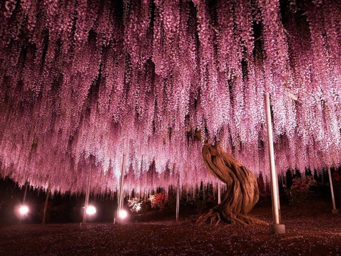 19-of-the-most-beautiful-trees-in-the-world-4