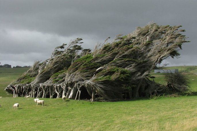 19-of-the-most-beautiful-trees-in-the-world-6