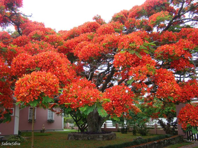 19-of-the-most-beautiful-trees-in-the-world-9