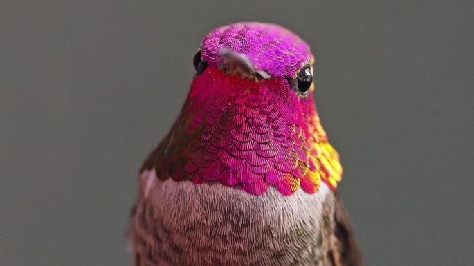 2-humming-bird-photography-by-melanie-barboni