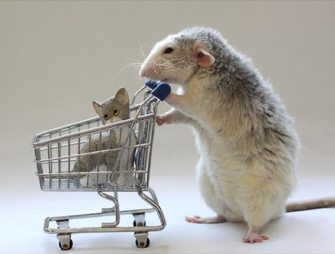 blog_yummypets_rat_caddie_02_14