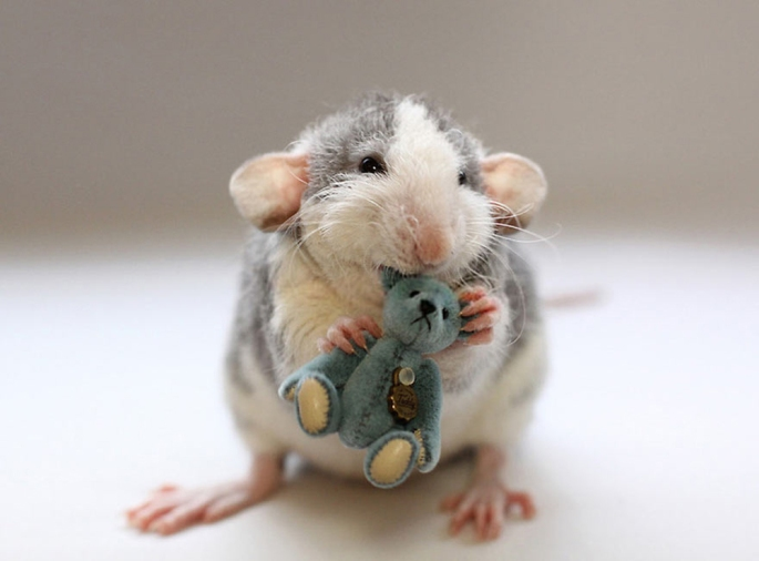 cute-rat-bear-Ellen-van-Deelen-blue - Copie
