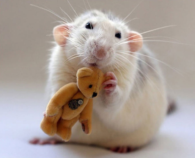 cute-rat-bear-Ellen-van-Deelen-yellow - Copie