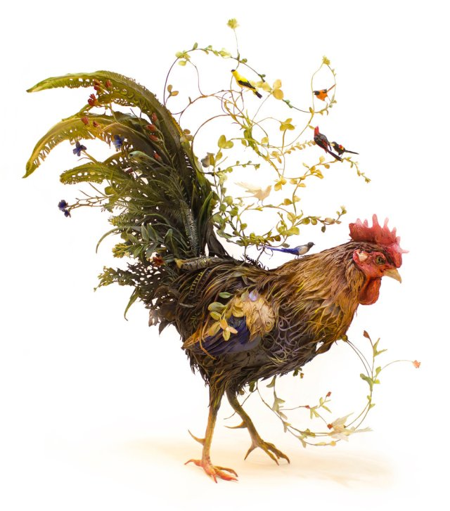 rooster+