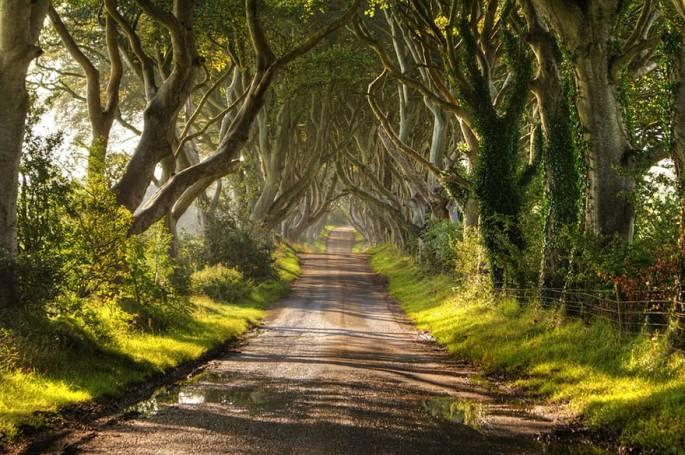 the-dark-hedges-in-northern-ireland-2